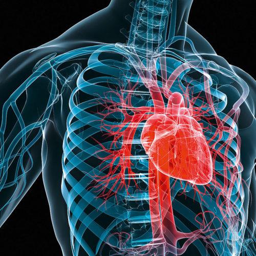 Thorasic and Vascular surgeries